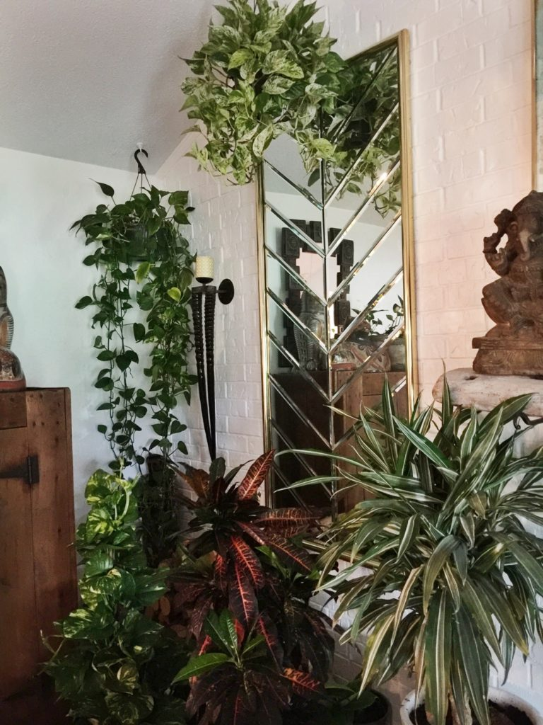 Here's a corner of my living room with my hanging pothos.